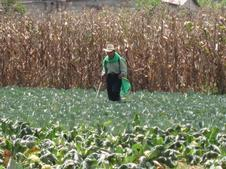 pesticides in guatemala